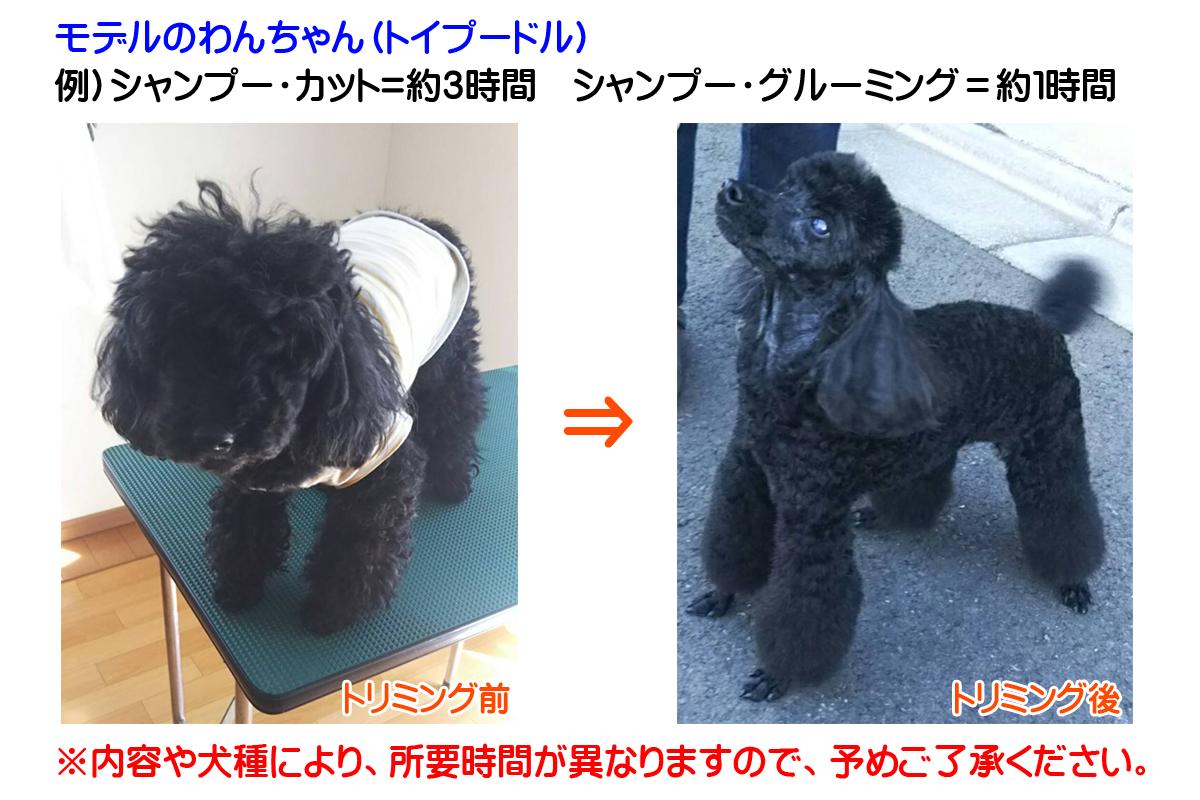 モデルのわんちゃん(トイプードル) 例)シャンプー・カット=約3時間 シャンプー・グルーミング=約1時間 ※内容や犬種により、所要時間が異なりますので、予めご了承ください。